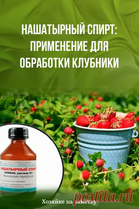 Нашатырный спирт: применение для обработки клубники