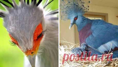 30 необычайно красивых птиц, о которых вы, возможно, не слышали Считается, что на Земле примерно от 9 000 до 10 000 видов птиц – Самые лучшие и интересные посты по теме: Виды, живая природа, животные на развлекательном портале Fishki.net