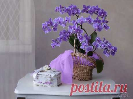 Still life with purple orchid by Daykiney on DeviantArt