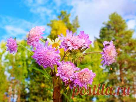 Доброго сентябрьского понедельника! Пусть новая неделя будет легкой,спокойной,радостной,плодотворной и удачной)))😀💐💜💛💙💚