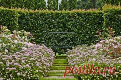 Сад в миниатюре: советы начинающим садоводам | ELLEDECORATION