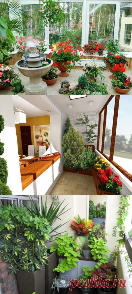 Зимний сад на лоджии: идеи