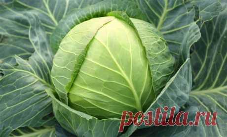 Яичное масло - лечебные свойства, способ приготовления.