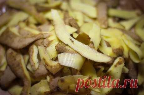 Как получить много смородины с помощью картофельных очисток — Полезные советы