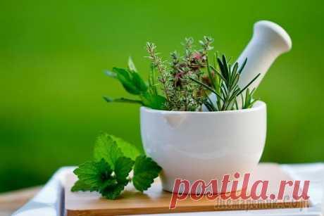 Популярные растения в медицине: лечить нельзя исключить?
