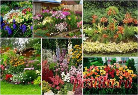 Красивые клумбы из многолетников своими руками на даче: фото Оформление цветочных клумб из многолетних растений на даче своими руками. Примеры цветников с фото, схемами.