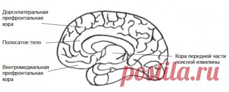 Мозг, позитив и обучение пожилых