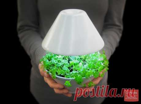 "Bases of the correct illumination of houseplants - ""Уход"":: to read on the website LePlants.ru"