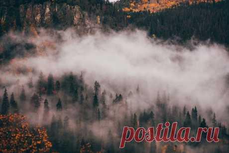 «Дыхание осени» Туман в ущелье Аманауз (Домбай) после ночной грозы. Автор снимка – Михаил Лежнёв: nat-geo.ru/community/user/208743/