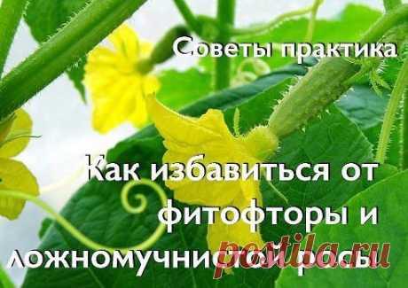УЮТНЫЙ ДОМ И САД–Елена Соничева(Шункина)добавилафотографию в альбомОгороды, грядки