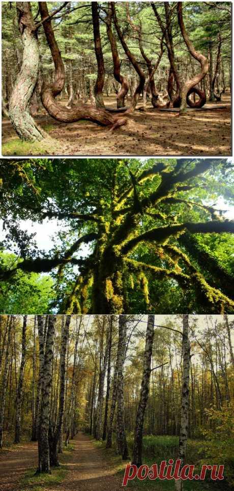 Уникальные леса России — Природа — Релакс!