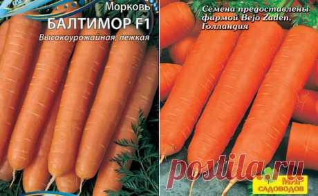 Морковь Балтимор: описание сорта, фото, отзывы, характеристика, достоинства и недостатки, особенности выращивания, урожайность