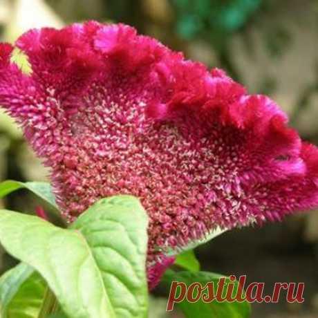 Подкормка домашних цветов натуральными удобрениями