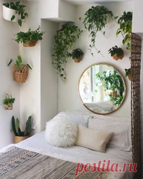9 лучших комнатных растений для спальни