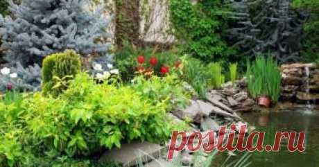 9 растений для влажных и сырых почв Если вашем саду высокий уровень грунтовых вод, а во время весеннего паводка и после сильных дождей вода в некоторых местах застаивается надолго – высадите растения, которым подходят такие условия.
