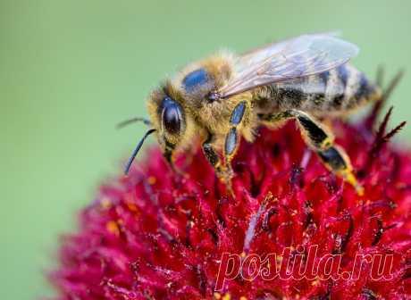 Пчелиная семья - это единый организм | Пчелы в радость | Яндекс Дзен