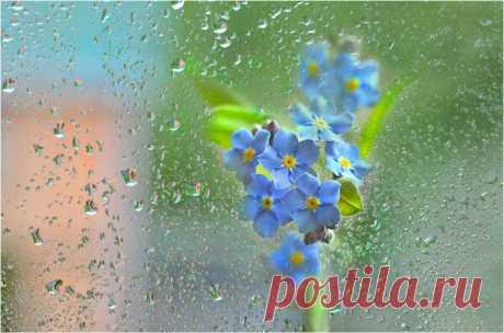 Мне нравится, когда идут дожди Земные, тёплые, без тени на ненастье. Мне нравится в спокойствии души Молчание, похожее на счастье... (с)