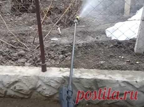 Как я борюсь с оидиумом и милдью на винограднике – моя схема обработки. | Самарский виноград | Яндекс Дзен