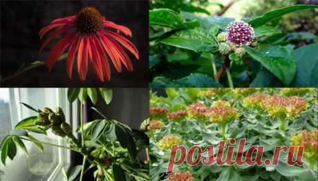 Леди Красота | Какие адаптогены препараты растительного происхождения? Растительные адаптогены — натуральные природные вещества, воздействуют на организм человека и помогают приспособиться к стрессу. Также известны как вещества, которые восстанавливают и защищают…
