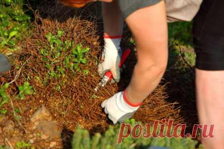 Почему сорняки нельзя оставлять на грядах на зиму | Почва и плодородие (Огород.ru)