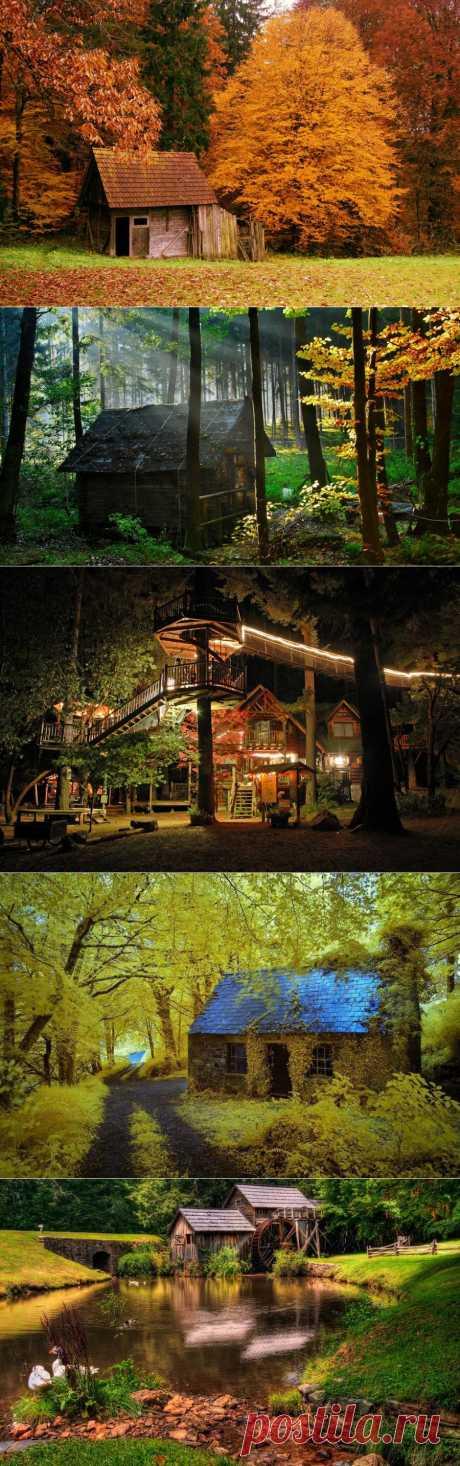 Самые красивые дома в лесу : НОВОСТИ В ФОТОГРАФИЯХ