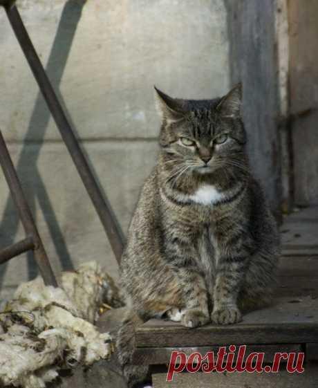 Деревенского кота с городским не спутаешь — Убойный юмор