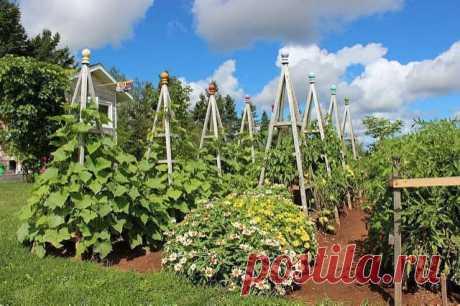 Строим пирамиду для лучшего урожая огурцов