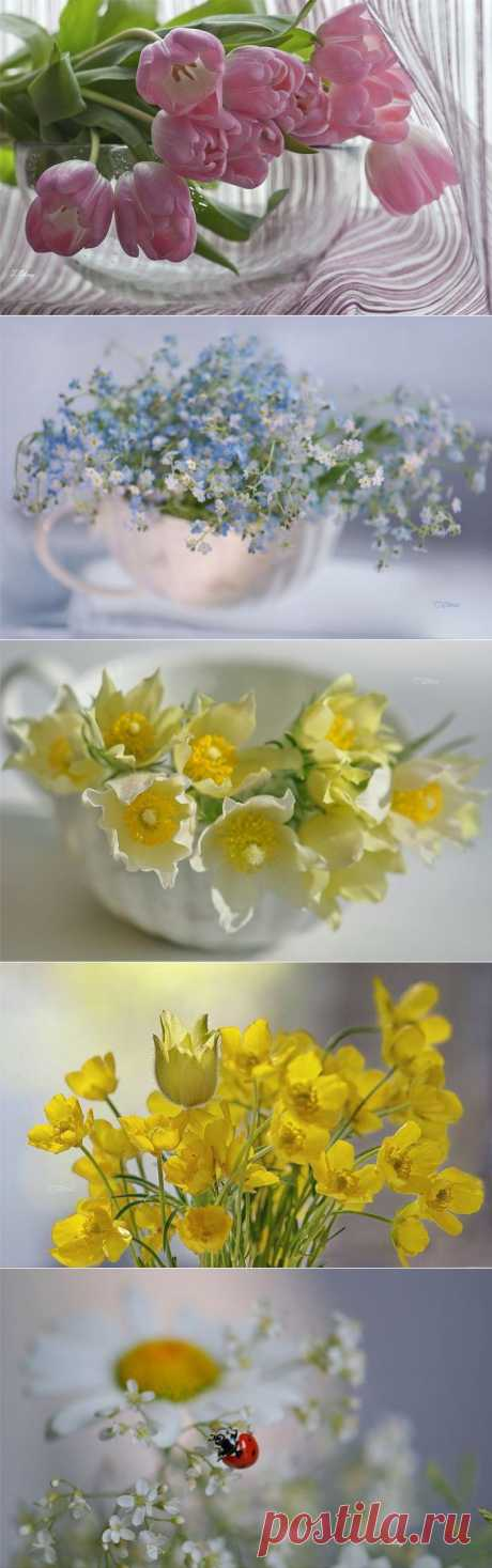 Нежные цветы в фото натюрмортах.