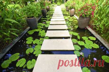 Water Gardens | The Article Home Water gardening can be in the form of waterfalls, ponds, fountains, all of which can be enhanced by rock work combinations and lighting, plants, and fish.
