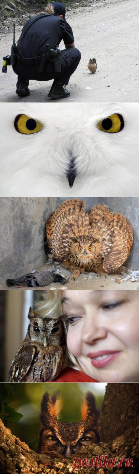 Эти супер, супер-совы!