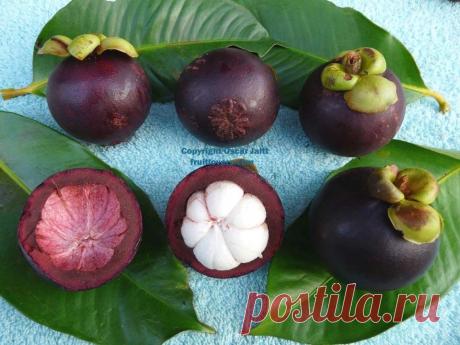Лучший экзотический фрукт в мире по мнению дореволюционной газеты | Книга растений | Яндекс Дзен
