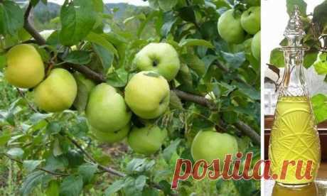 """СЛАДКАЯ НАСТОЙКА """"АНТОНОВКА""""  Ликер очень приятный, с ощутимым ароматом яблок, а именно антоновки. В следующем году буду делать еще!  Ингредиенты: Показать полностью…"""