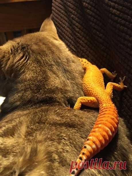 Доказательства того, что животные умеют дружить лучше некоторых людей - Друг - медиаплатформа МирТесен