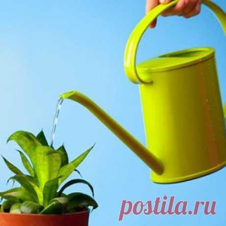 Как выбрать удобрение для любимых комнатных растений - МирТесен