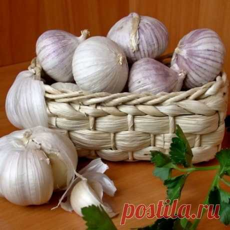 Plot on garlic, preserved against angry people.