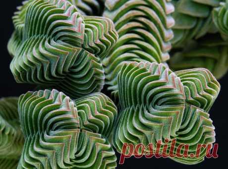 15 завораживающих взгляд примеров совершенства из мира растений