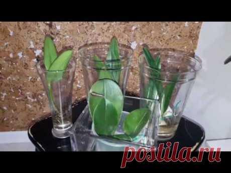 La solución y el vidriado por (el té con limón), es evidente)))