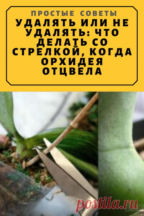 Удалять или не удалять: что делать со стрелкой, когда орхидея отцвела — Простые советы
