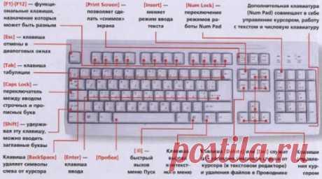Назначение клавиш клавиатуры компьютера. Назначение клавиш клавиатуры. Предисловия не будет, сразу начнем рассказывать подробнее о назначении каждой из клавиш на клавиатуре. Клавиша«пробел»— помимо своей основной функции, делать пробел между словами, ещё и удаляет «выделенный» объект. Esc— отмена последнего действия (закрывает ненужные окна). Print Screen— выводит на печать содержимое экрана –«фотографирует» экран. Потом снимок экрана мы можем вставитьв Word или …