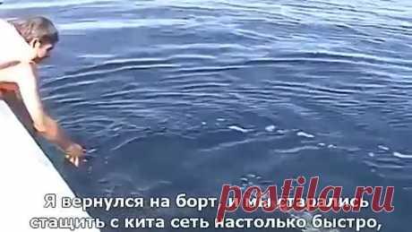 El salvamento de la ballena