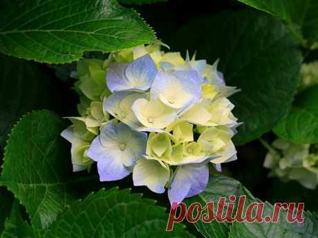 Дивный Цветок