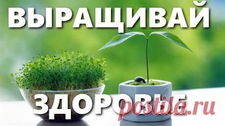 Лекарства на наших грядках - зверобой, душица или орегано, мята, розмарин, тимьян или чабрец | INTERes Какие же полезные травы и пряные травы можно посадить? - Видео об этом🌿🌱☘️☘️ ☘️Лекарства на наших грядках и какие пряные полезные травы и лекарственные растения можно вырастить на даче или на балконе?  ☘️Что это за пряная трава орегано и душица, это одно и тоже?   ☘️Тимьян или чабрец?  ☘️Зверобой, мята перечная, розмарин.