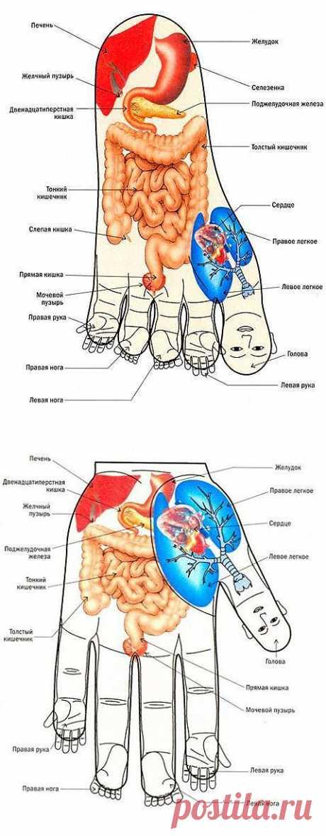 (+1) сообщ - Точки на стопах ног и ладонях | ДОМОХОЗЯЙКИ+