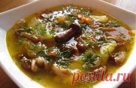 Грибной суп на мясном бульоне: лучший рецепт