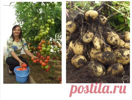 Малоуходный ОГОРОД без садовой химии   Экологическое садоводство   Яндекс Дзен