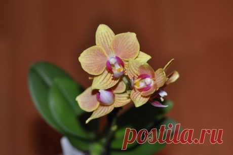 Народные удобрения для орхидеи — что и как использовать для пышного цветения | Секреты Сада. Дача, цветы | Яндекс Дзен