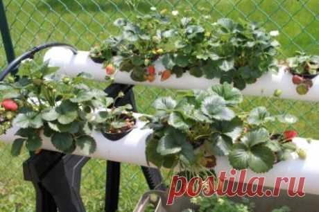 Способы выращивания клубники в трубах ПВХ, как выращивать клубнику в пластиковых трубах горизонтально и вертикально, в теплице и на балконе, правила посадки и уход.