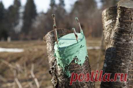 Прививка плодовых деревьев весной: сроки и способы прививки
