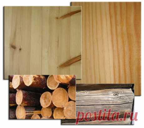 Породы древесины. Сосна.   Для тех, кто любит работать с деревом