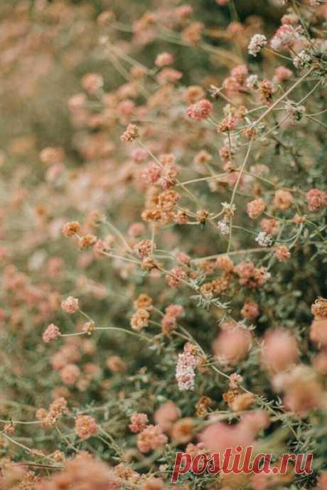 #цветы#кот#вечер  Alnatura~~~@~~~  Цветущим утром день стучится в мои двери, Ему открою душу я и вновь поверю. Не надо слов, не надо служб, икон не надо. В моей душе - твоя любовь - цветеньем сада.